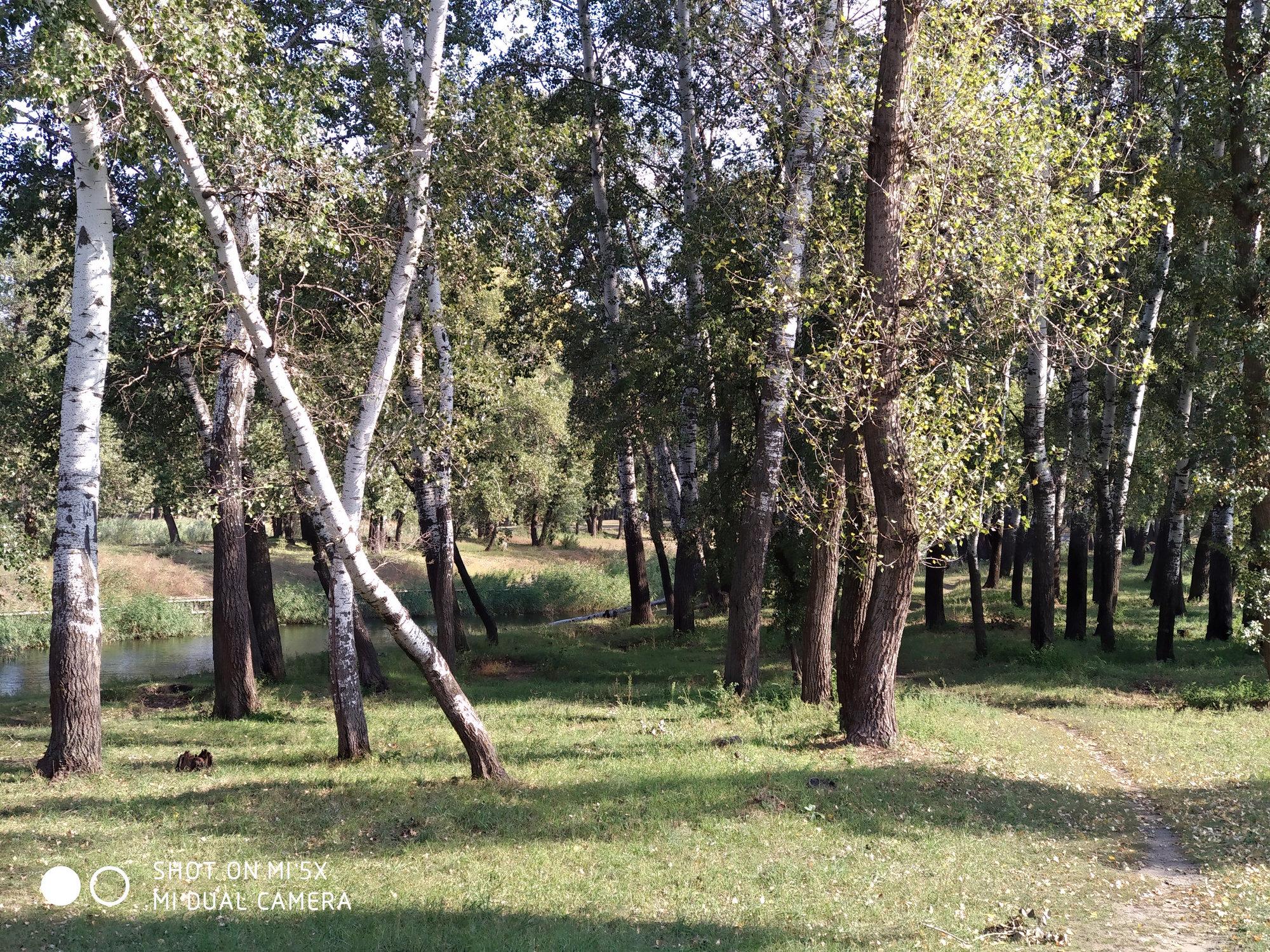 Деревья - пример фото на Xiaomi Mi 5x