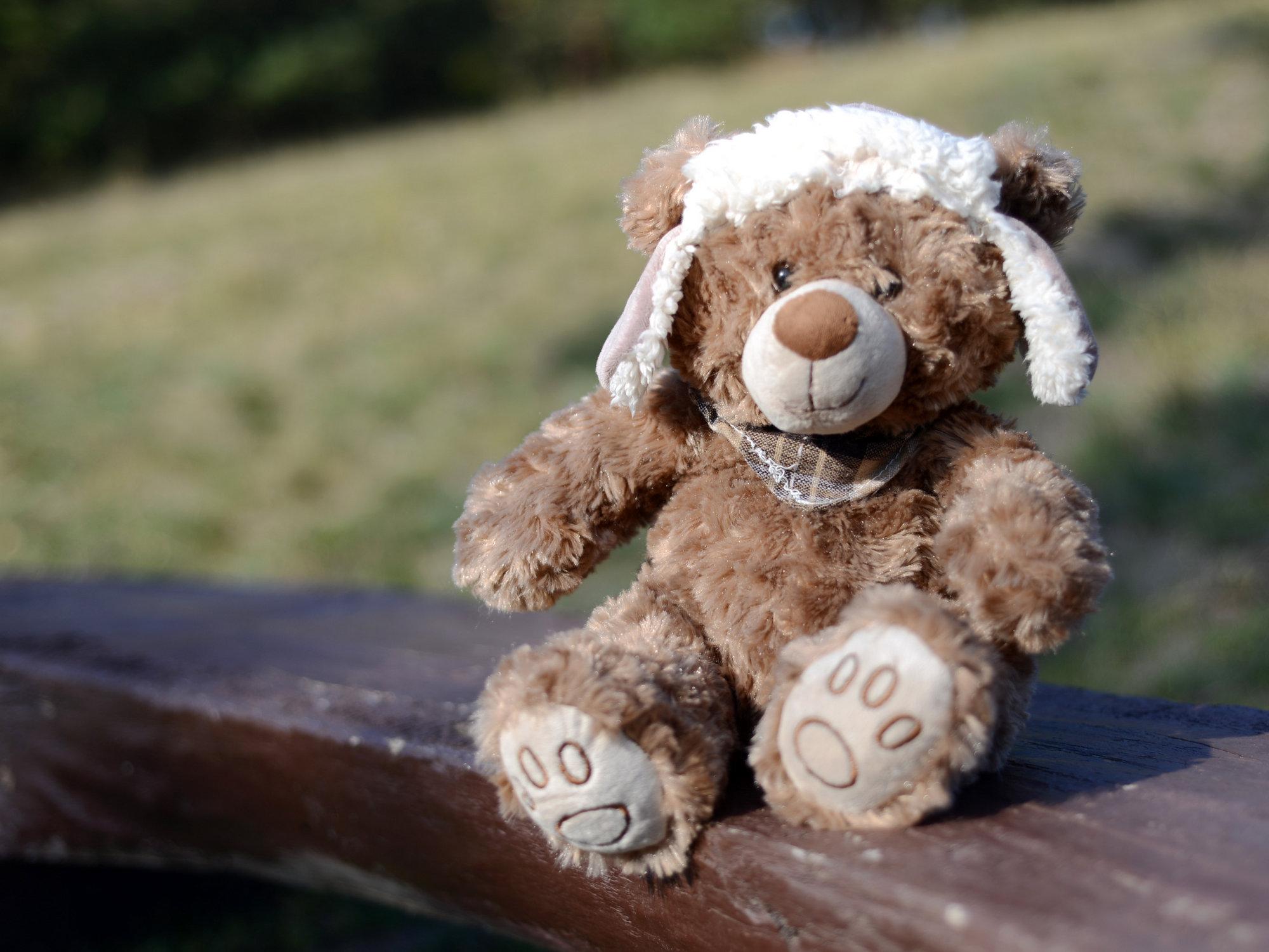 Медведь - пример фото на Nikon D600