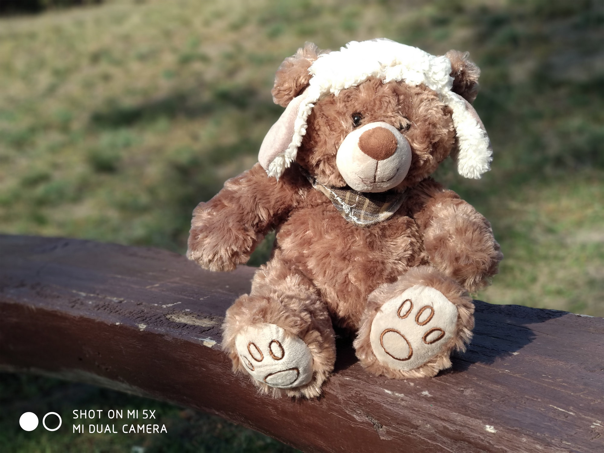Медведь - пример фото на Xiaomi Mi 5x
