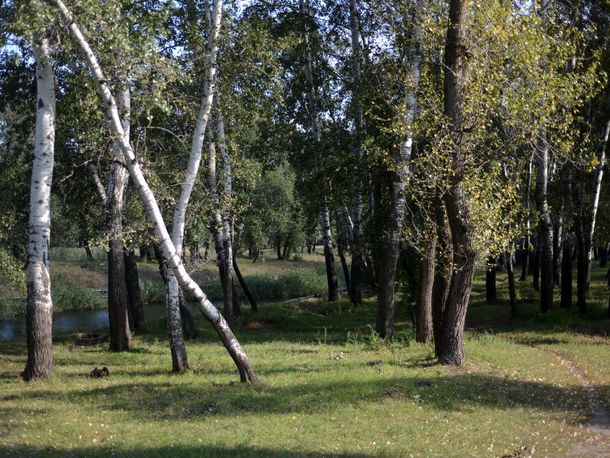 Деревья - пример фото на Nikon D600