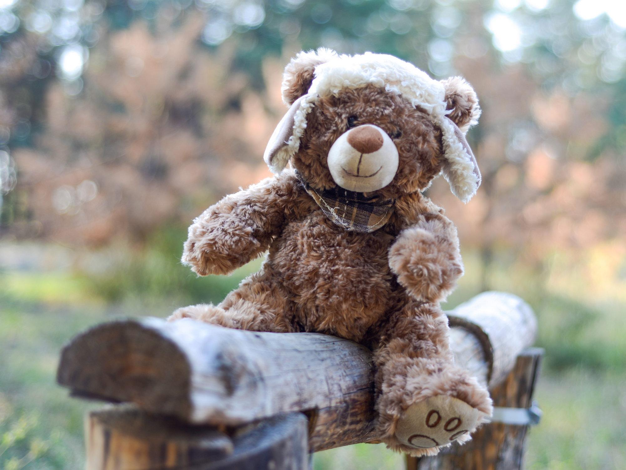 Медведь на бревне - пример фото на Nikon D600
