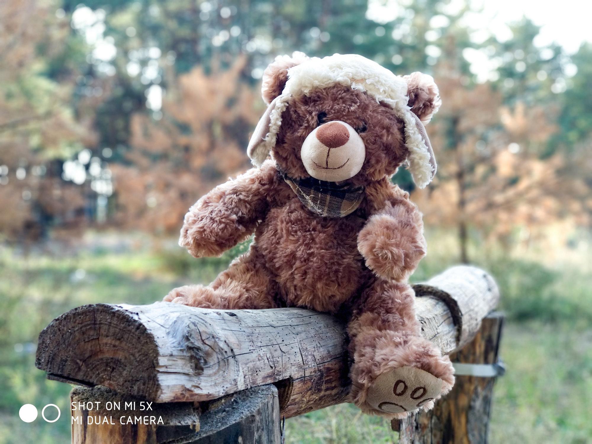 Медведь на бревне - пример фото на Xiaomi Mi 5x